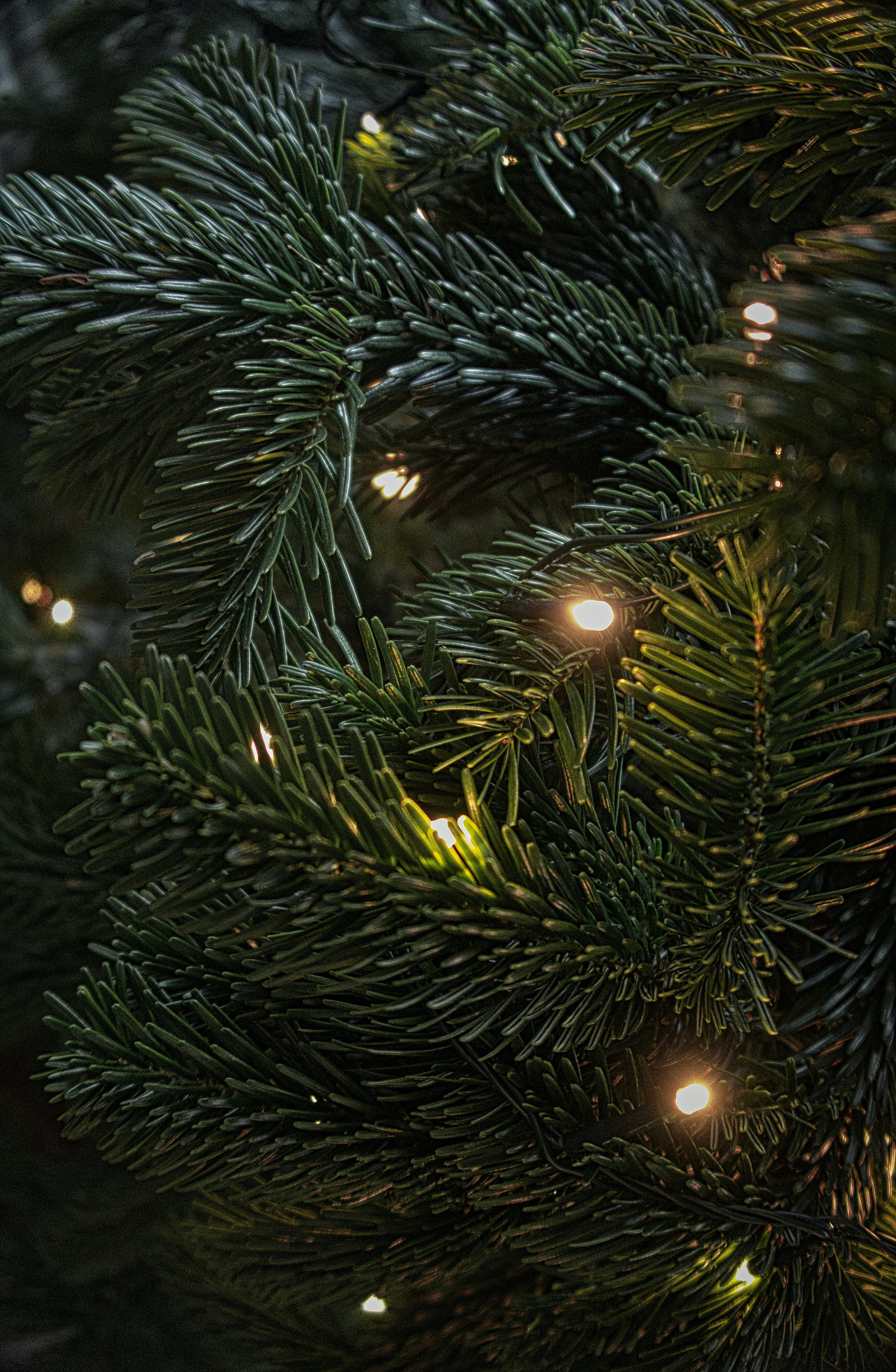 Shallow Focus Photography Of Green Christmas Tree