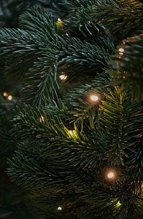 Darmowe zdjęcie z galerii z boże narodzenie, choinka, dekoracja świąteczna, lampki świąteczne