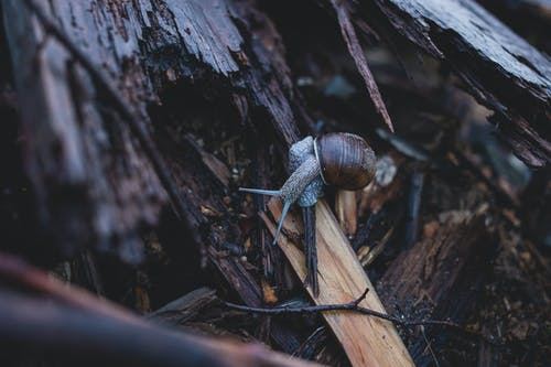 Selective Focus Photography of Snail on Fire Wood