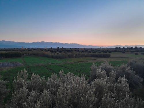 Foto d'estoc gratuïta de alba, camp, camps de cultiu, capvespre