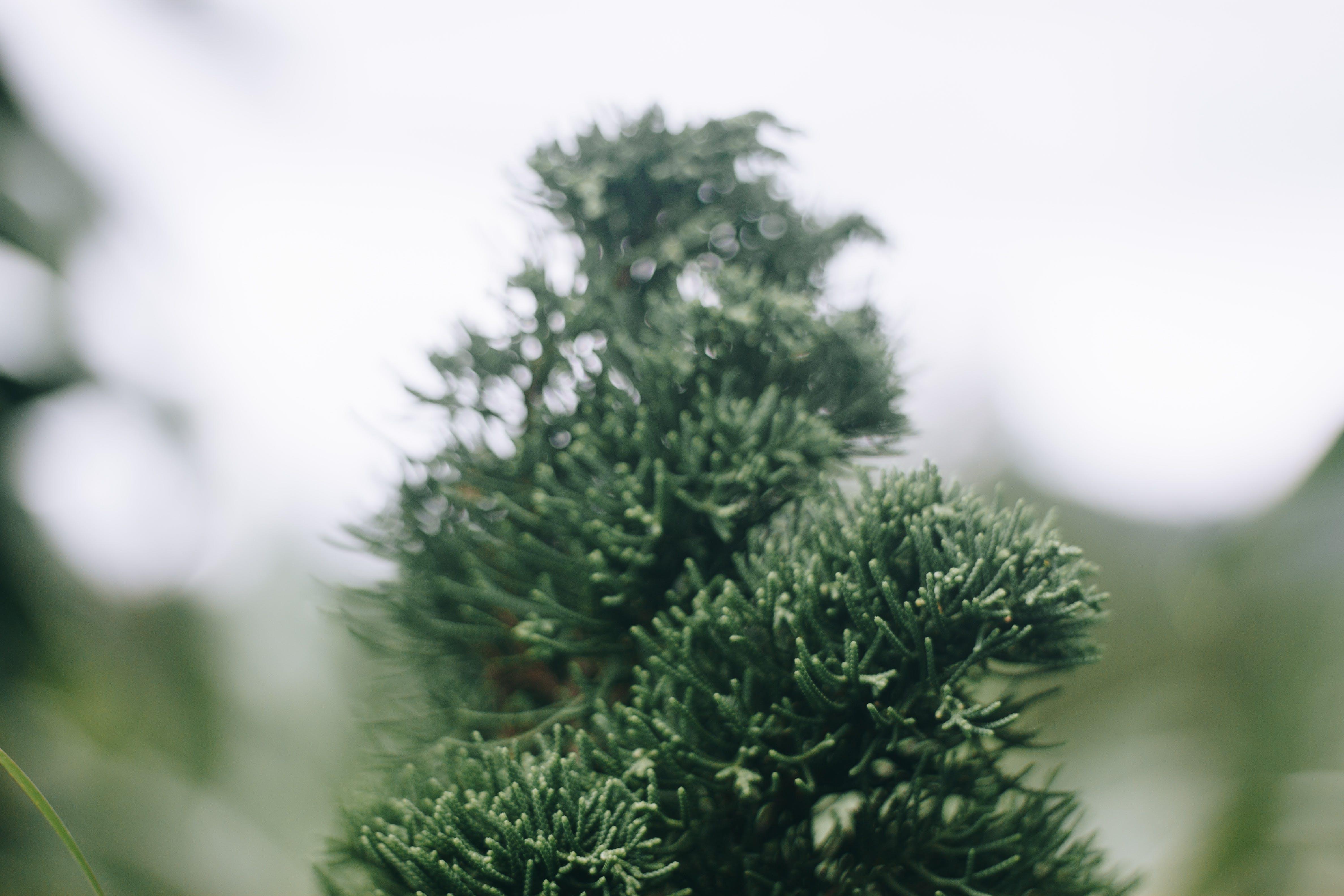 Free stock photo of green, moody, tree