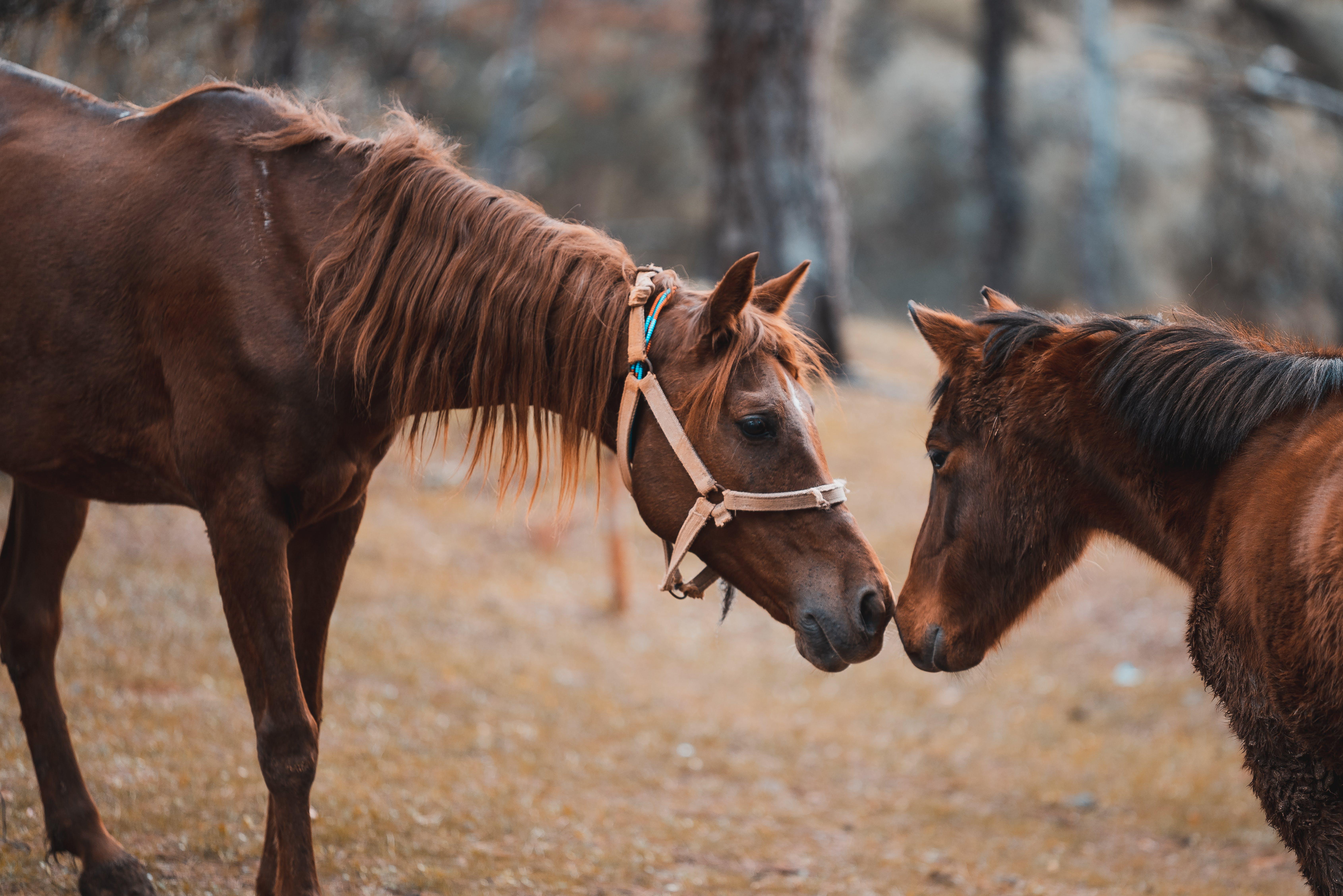 Gratis arkivbilde med buskap, dyreliv, gård, hesteaktig