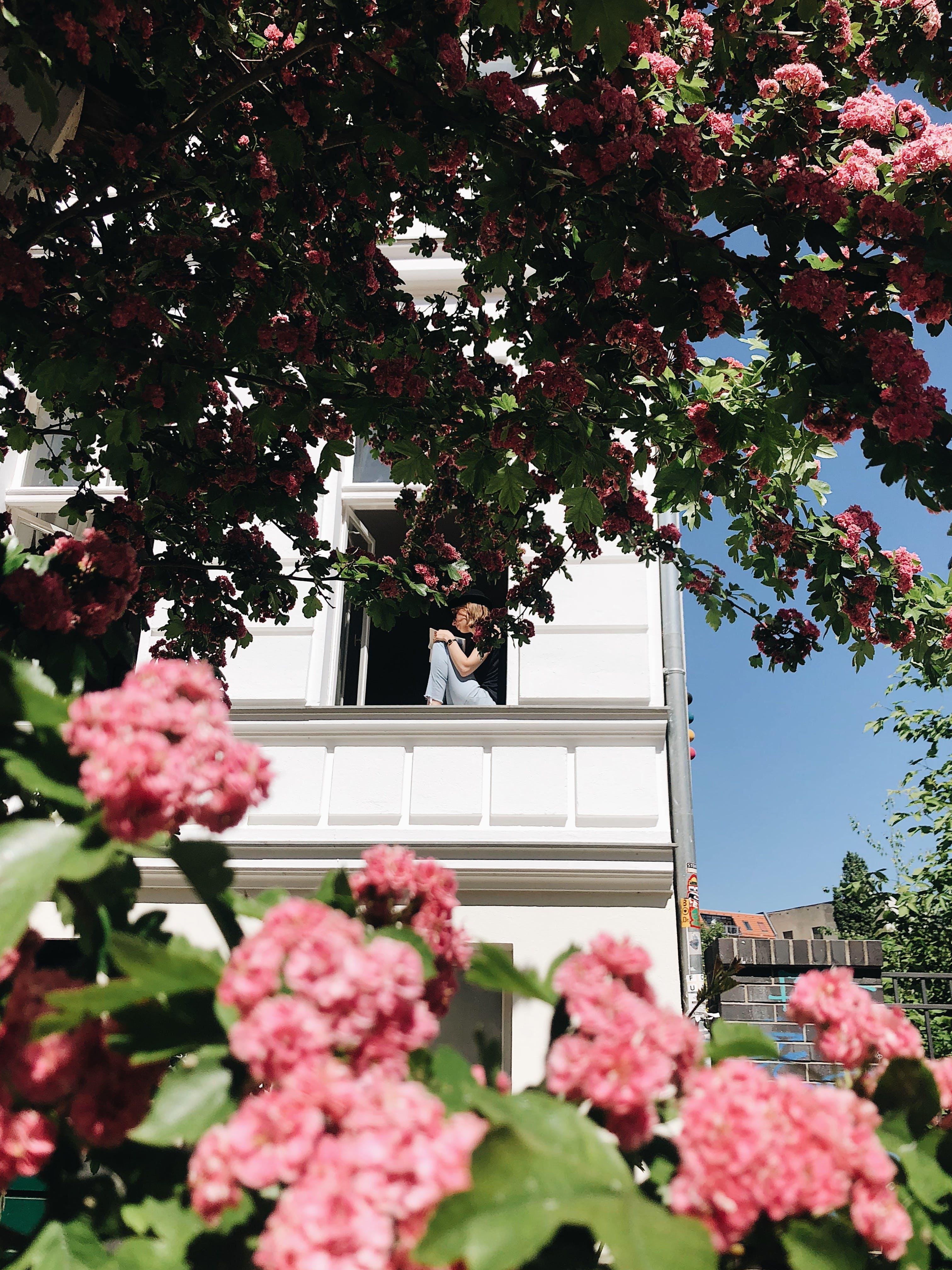 Immagine gratuita di albero, arbusto, bellissimo, bocciolo