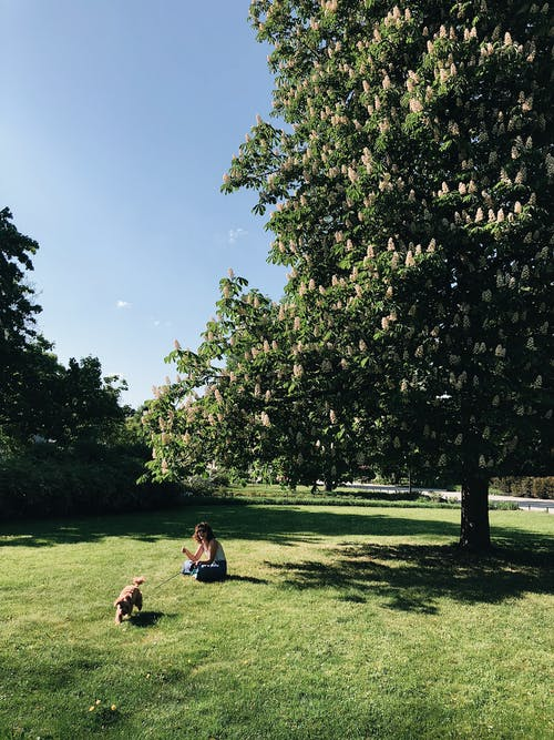 Fotobanka sbezplatnými fotkami na tému denné svetlo, exteriéry, park, prostredie