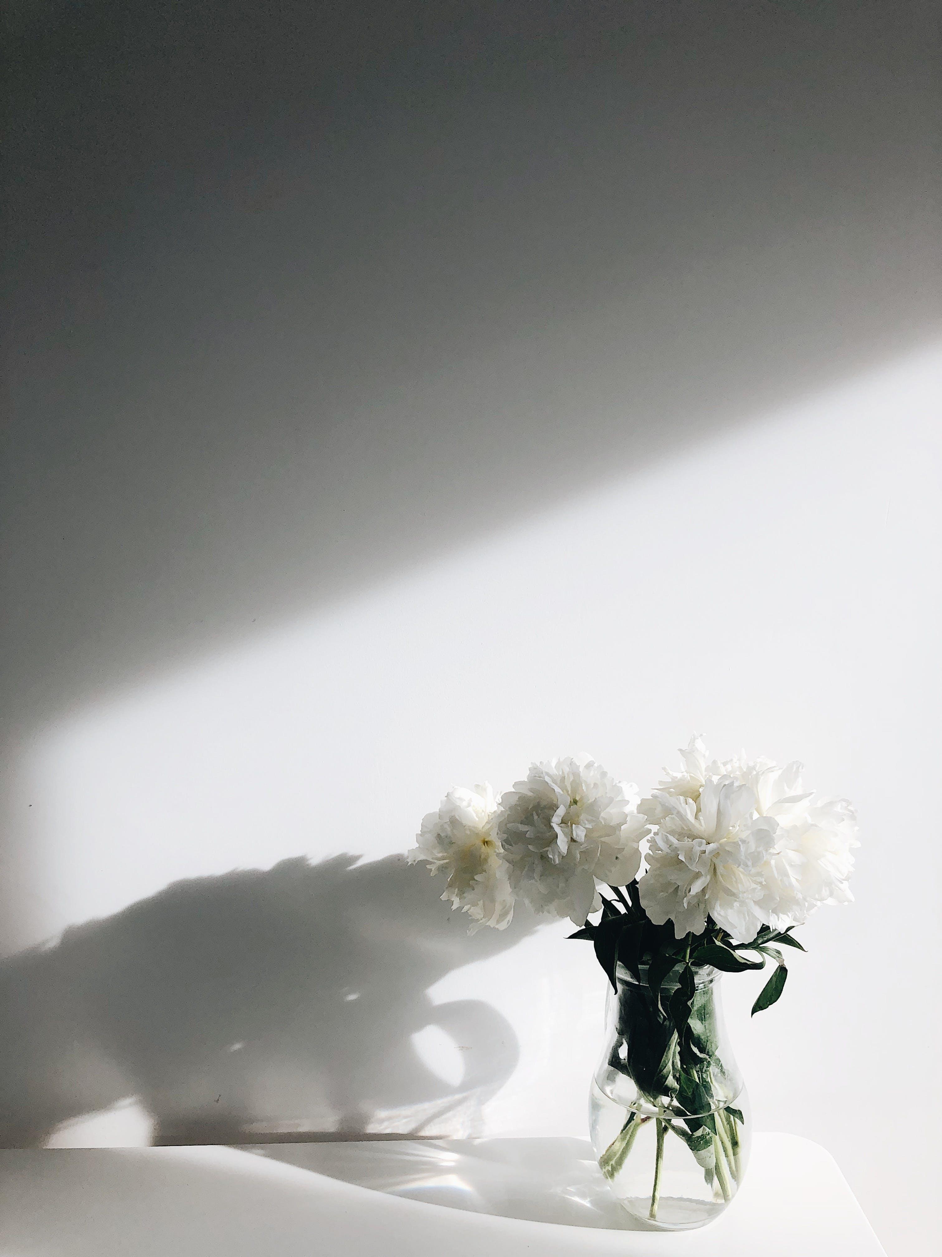 Foto stok gratis bayangan, bejana, berkembang, bunga-bunga