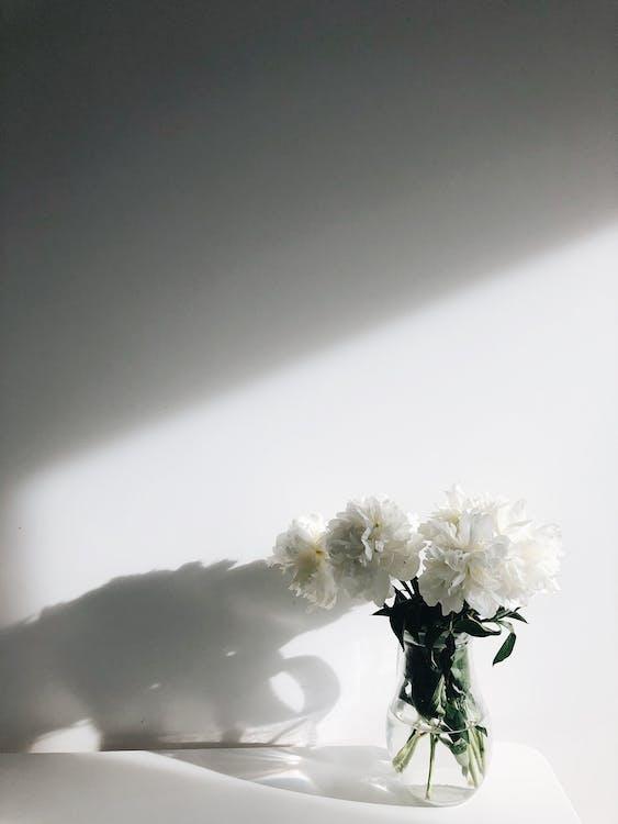 ваза, тень, флора