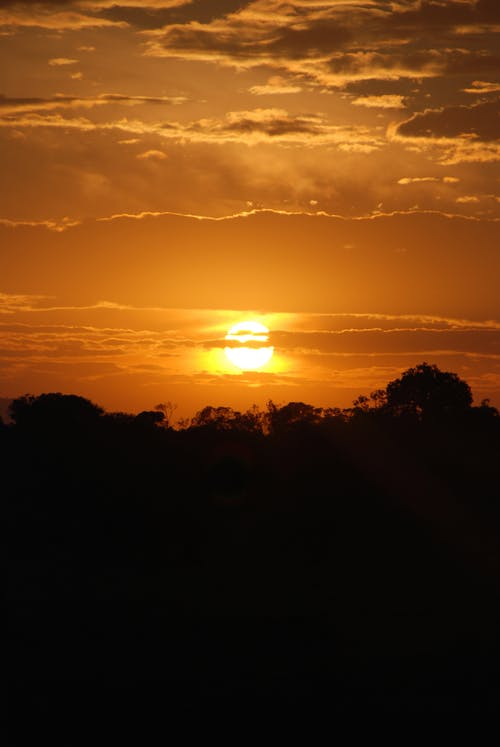 Kostnadsfri bild av afrika, kenya, safari, solnedgång