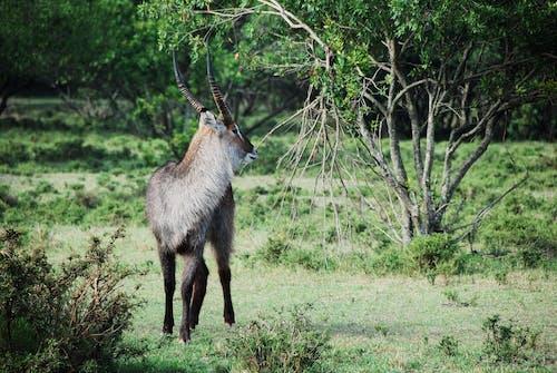 Gratis lagerfoto af afrika, antilope, dyr, dyreliv