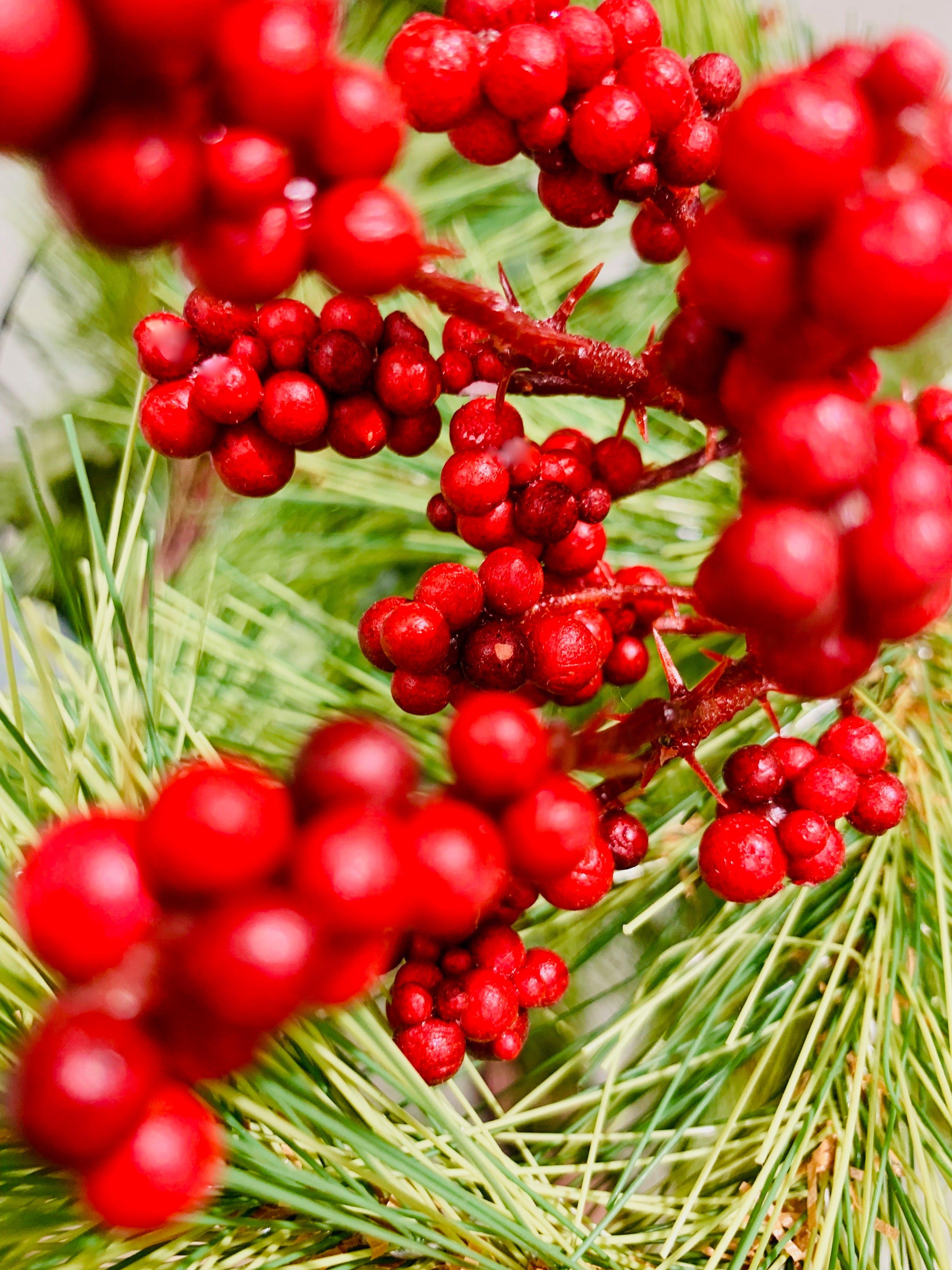 Kostenloses Stock Foto zu beeren, farbe, flora, früchte