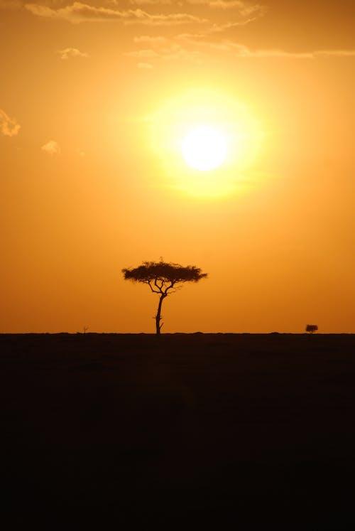 Ảnh lưu trữ miễn phí về Châu phi, cuộc sống hoang dã, Hoàng hôn, Kenya