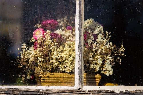 Ảnh lưu trữ miễn phí về ánh sáng ban ngày, cận cảnh, chậu hoa, cửa kính