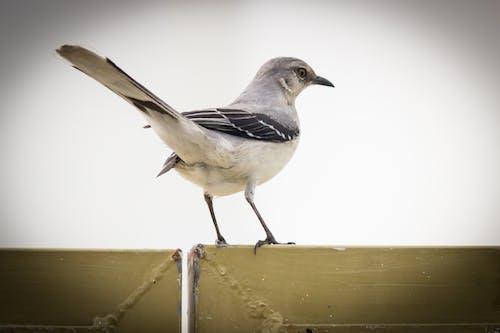 คลังภาพถ่ายฟรี ของ กระเต็นนกเขตร้อน
