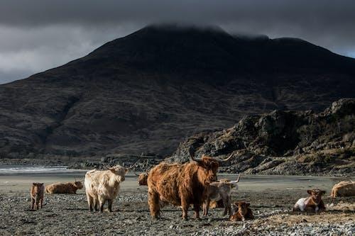 Ram Animals Near Mountains Under Gray Sky