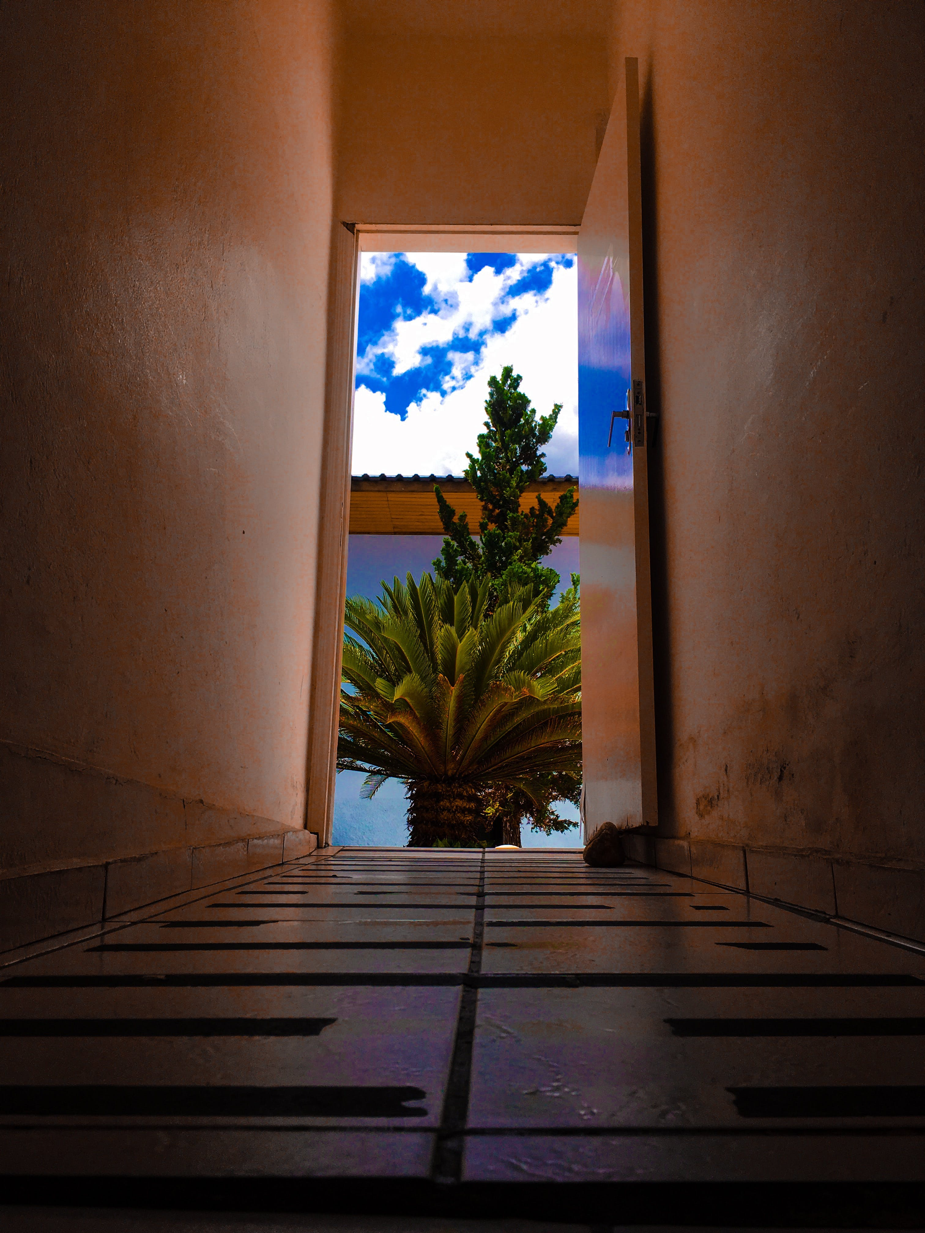 Hallway in Front of Palm Tree
