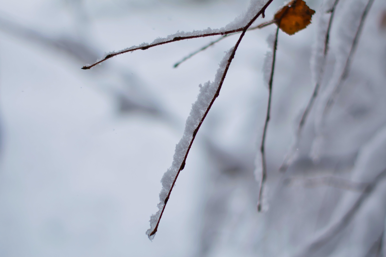 Kostenloses Stock Foto zu schnee, winter, zweig