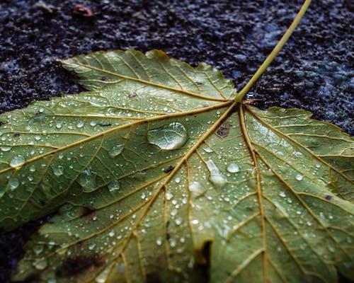 水滴, 濕, 特寫, 露 的 免费素材照片