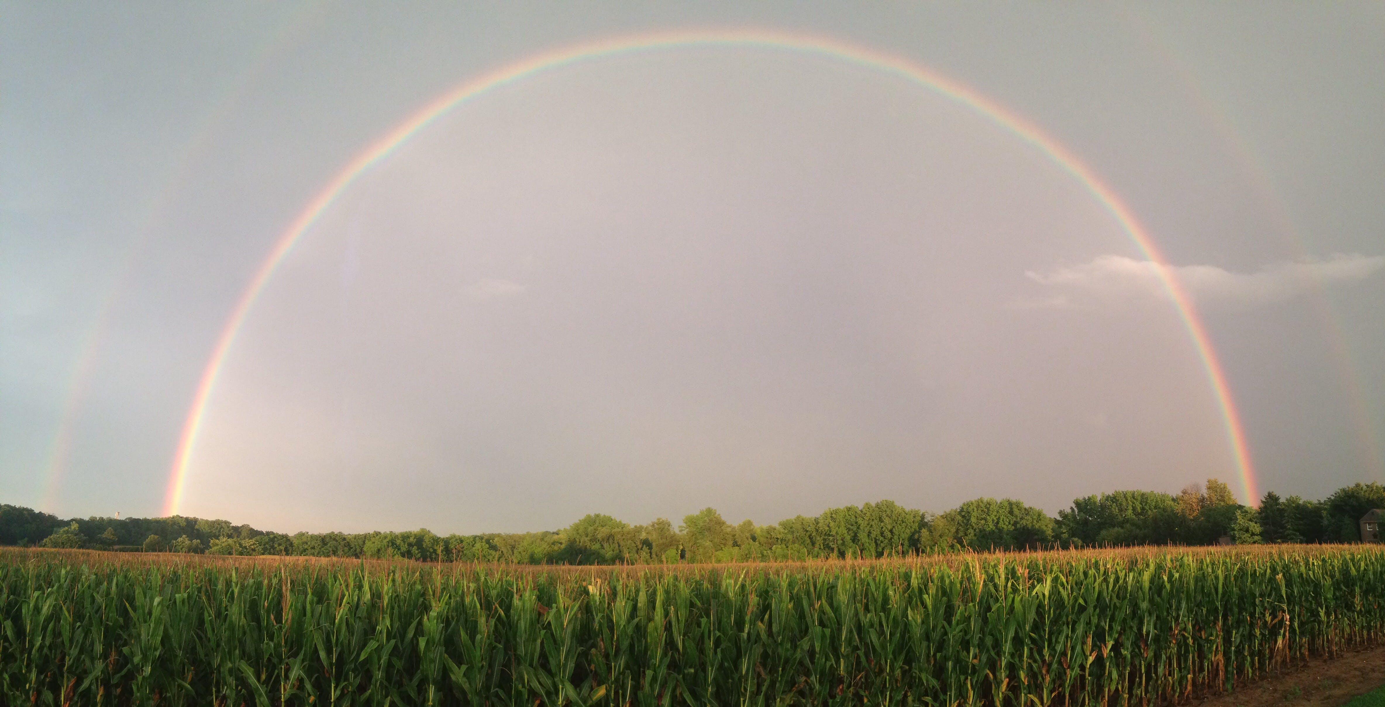 Kostenloses Stock Foto zu maisfeld, regenbogen