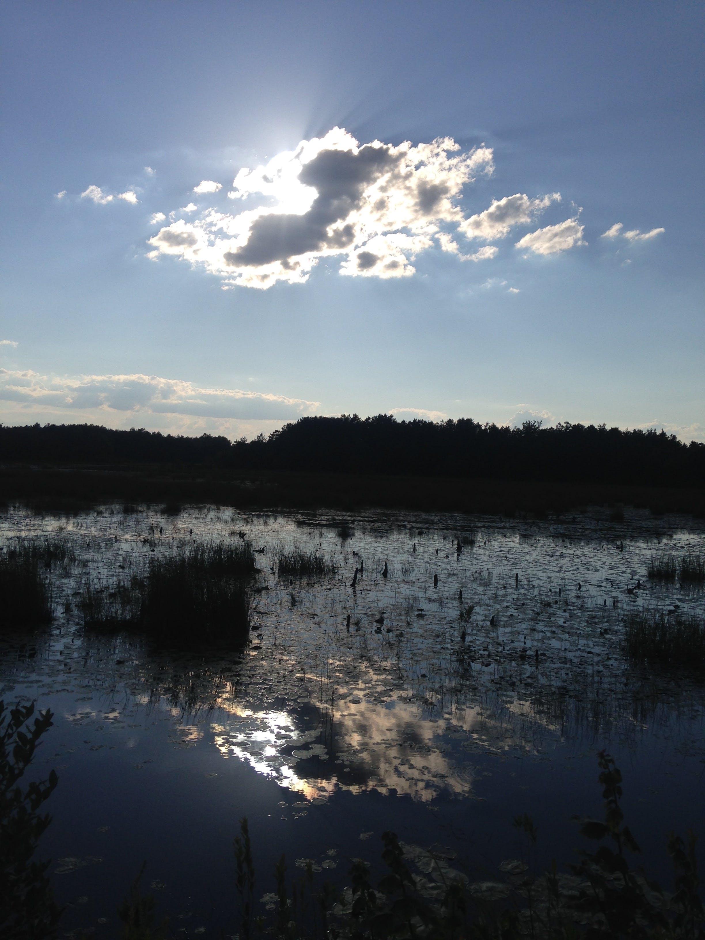 Kostenloses Stock Foto zu moor, pinelands, sonne, wolken