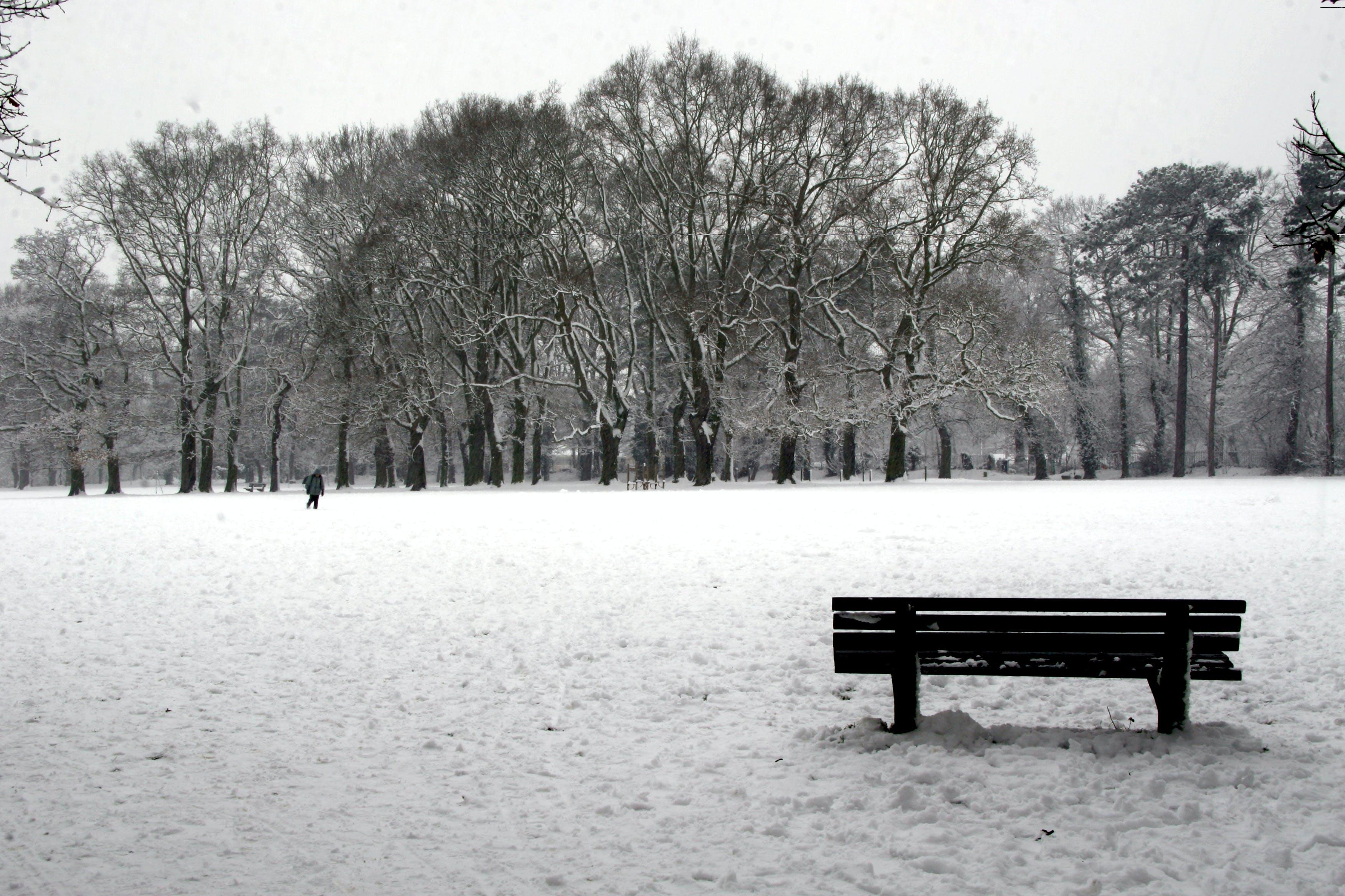 Free stock photo of Bench Snow, christmas, park, snow