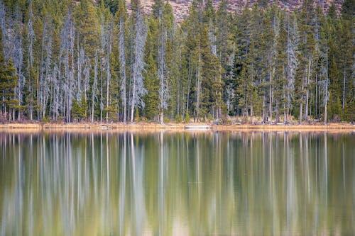 Безкоштовне стокове фото на тему «відображення, дерева, краєвид, ліс»