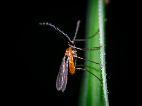 Kostenloses Stock Foto zu antenne, bug, fehler, insekt