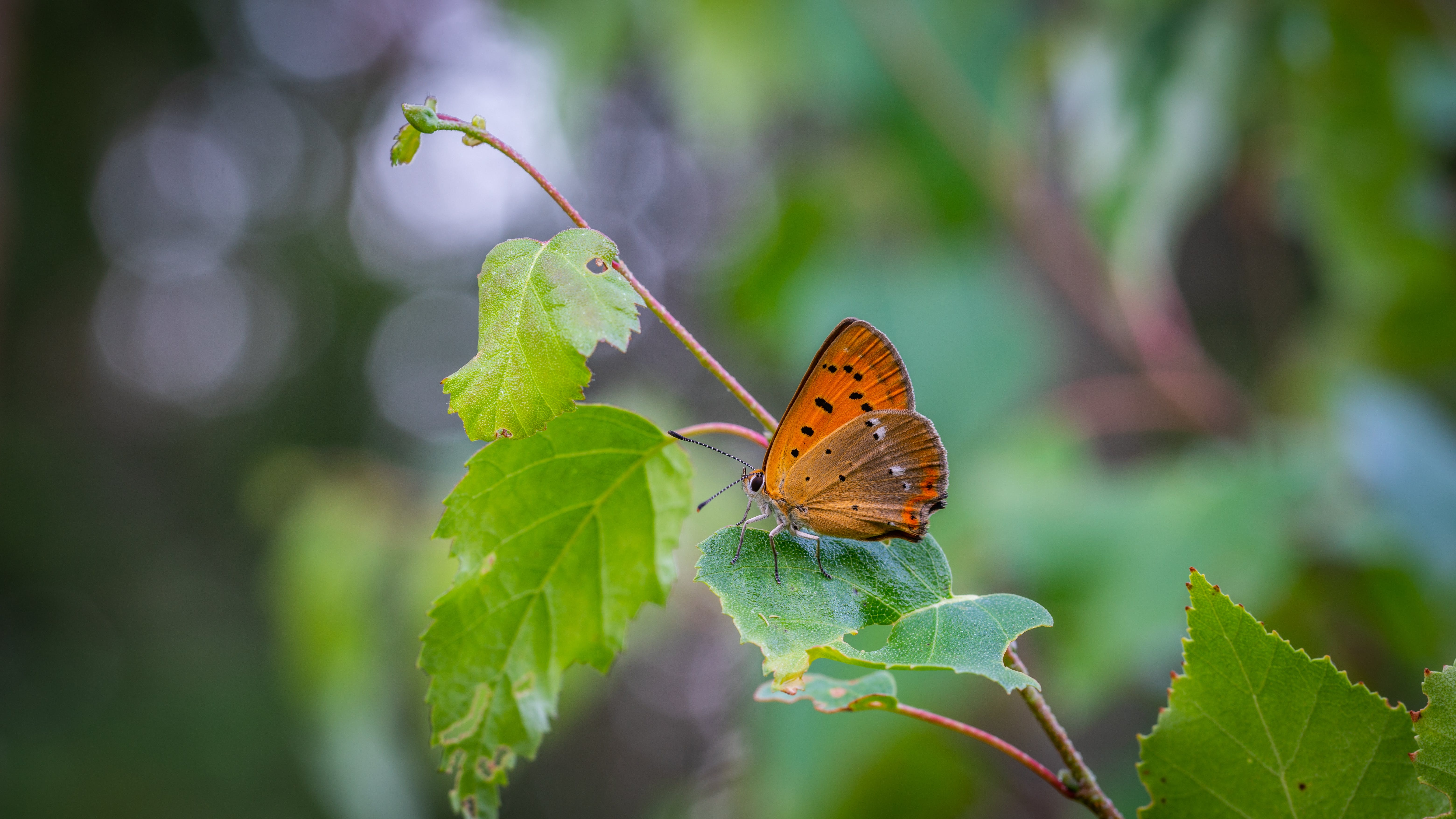 Close-Up Photo of Butterfly Perched On Leaf