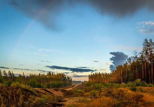 คลังภาพถ่ายฟรี ของ ต้นไม้, ท้องฟ้า, ธรรมชาติ, ป่า