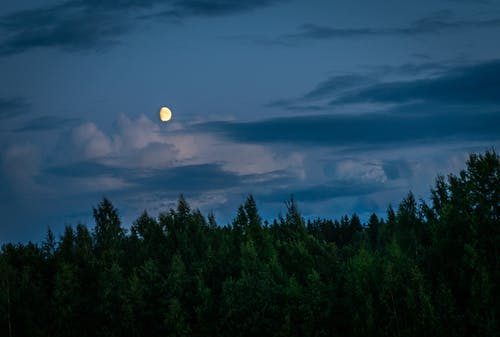 Moon Above Forest during Night Time