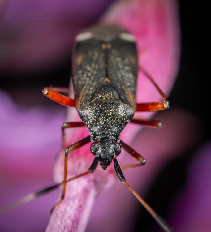 bezstavovce, biológia, chrobák