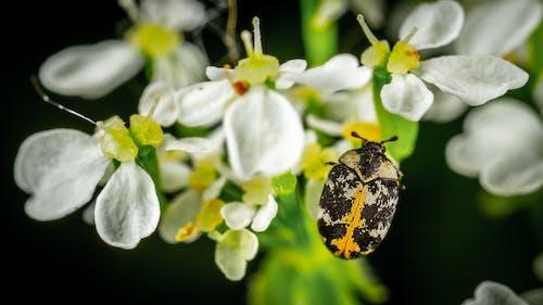 Kostnadsfri bild av blommor, flora, insekt, kronblad