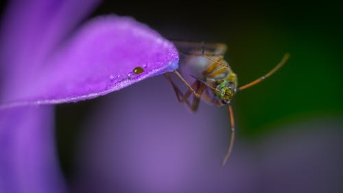 Beetle On Purple Flower