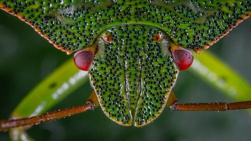 Kostnadsfri bild av fokus, grön, insekt, makro