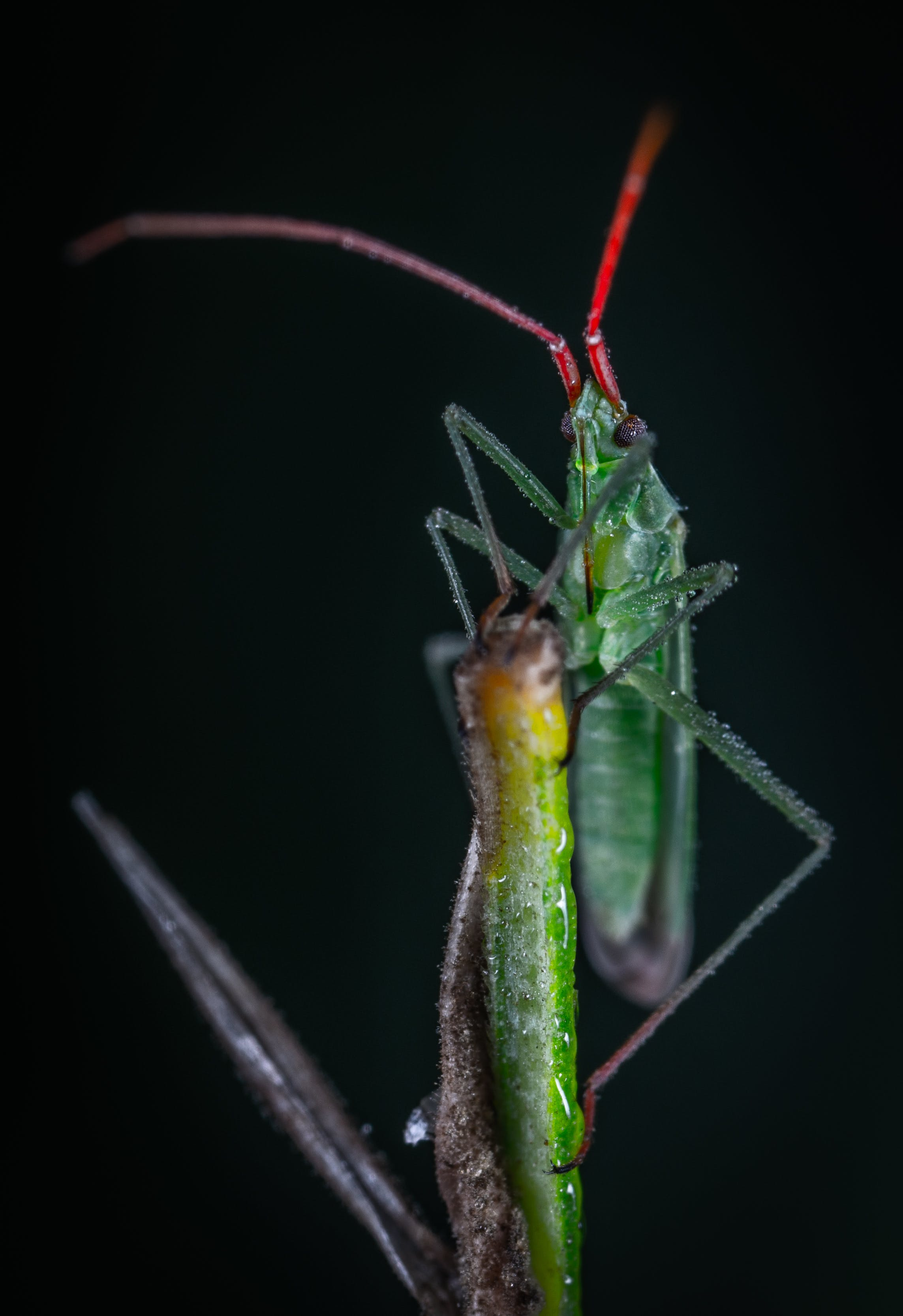 Green Bug in Close-up Photography