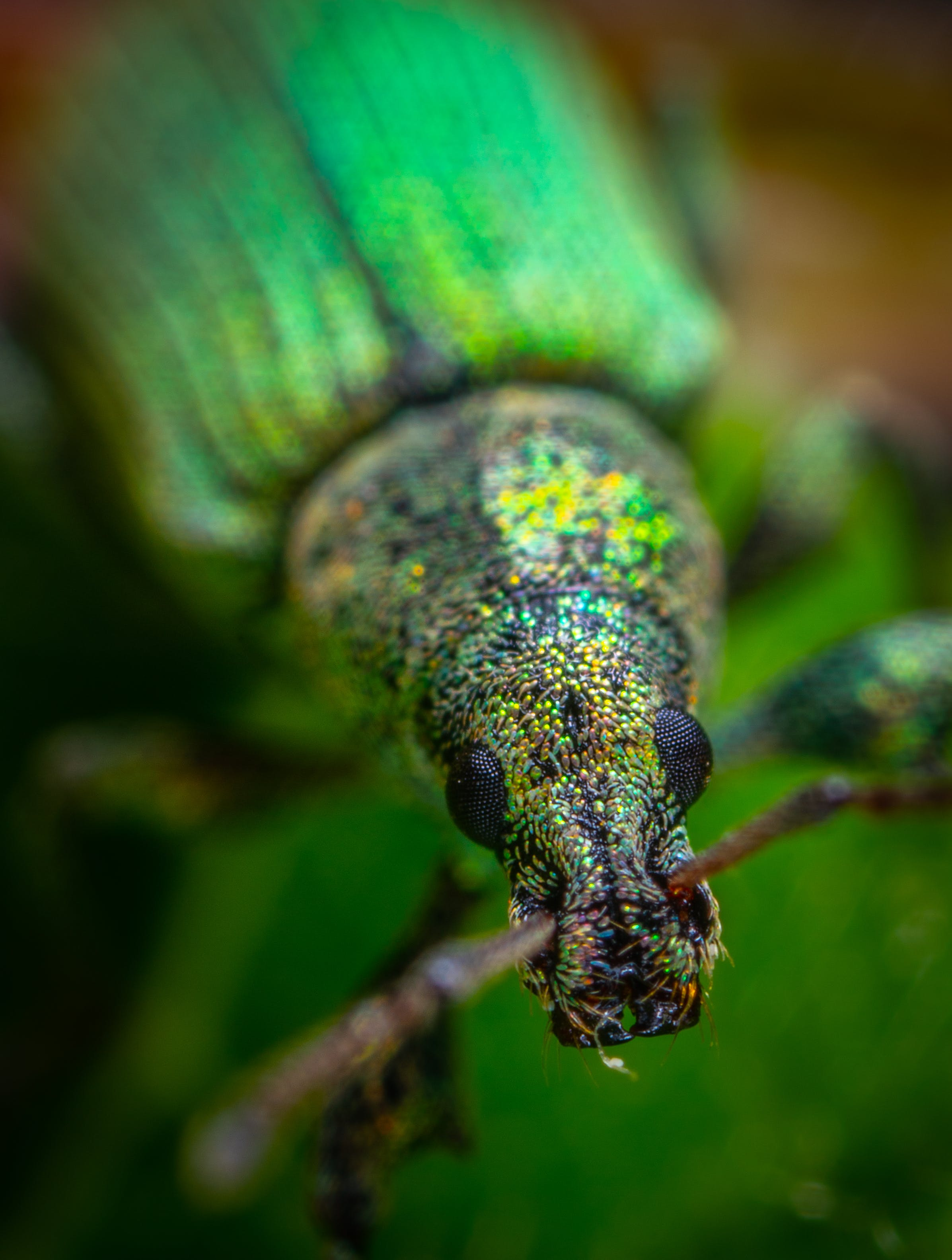 Bahçe, böcek, hayvan, kaplumbaga içeren Ücretsiz stok fotoğraf
