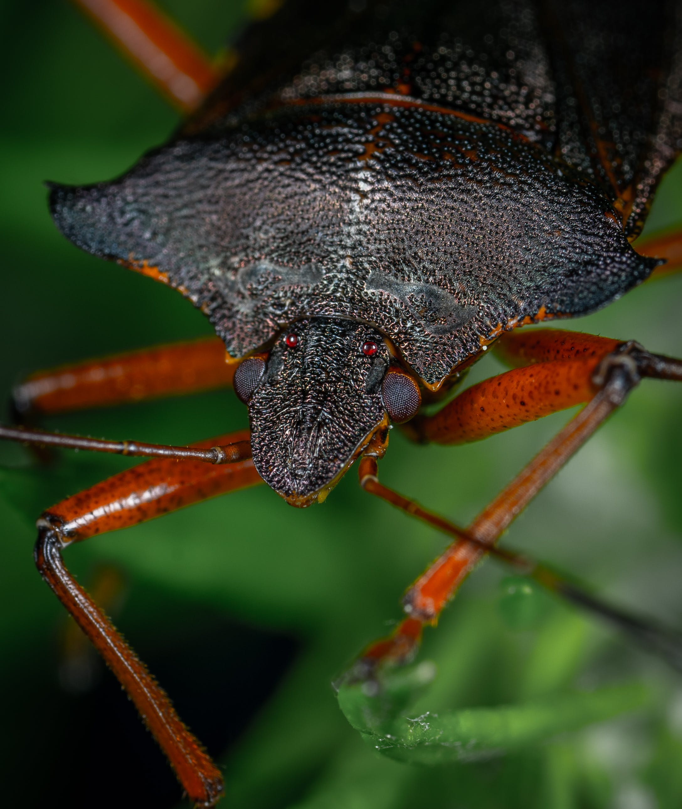 Close-Up Photo Of Brown Beetle