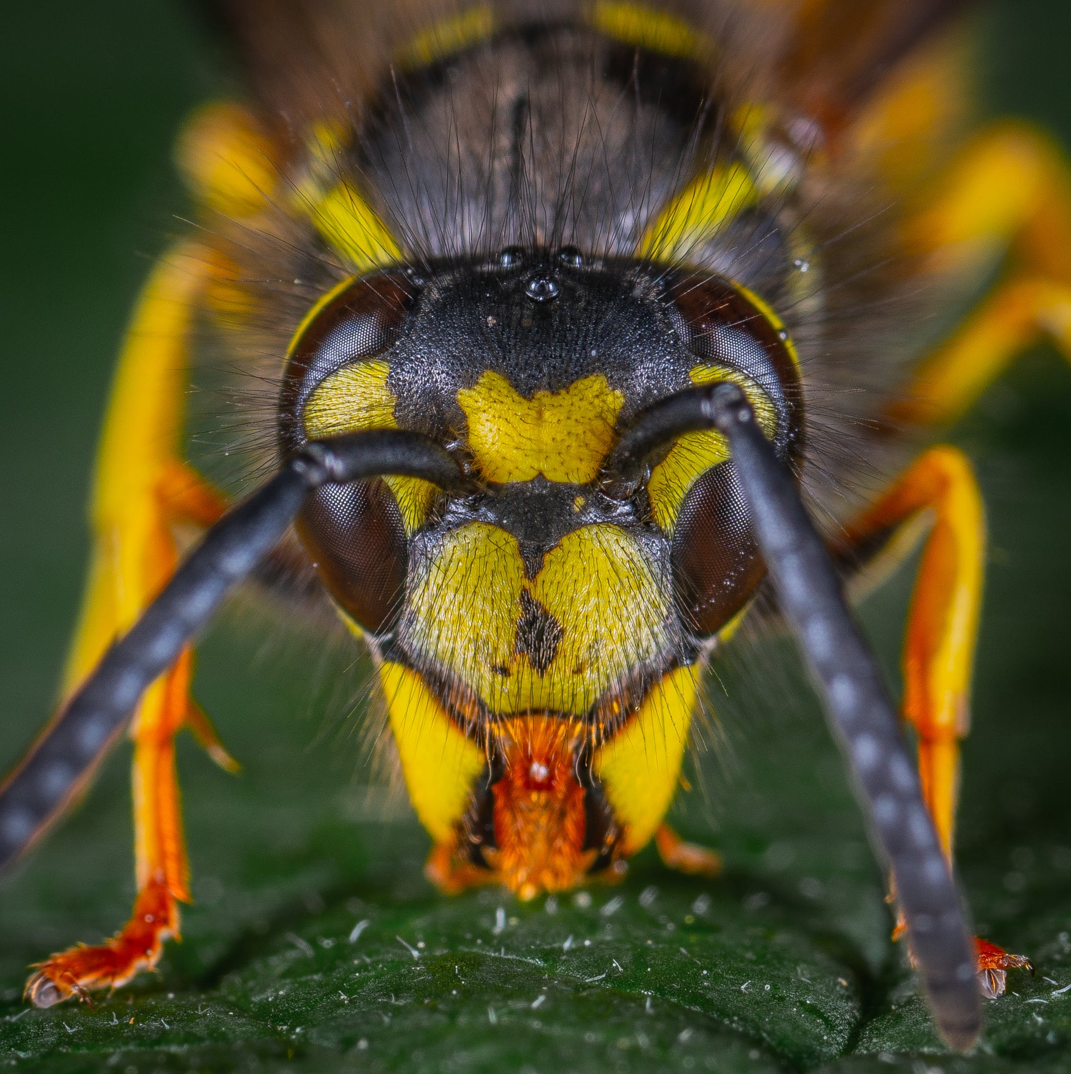 Macro Photography of Wasp
