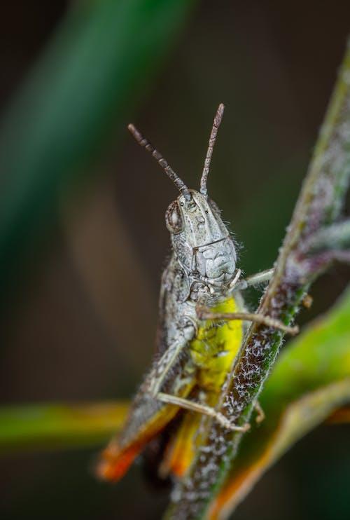 Kostenloses Stock Foto zu antenne, bug, fehler, grashüpfer