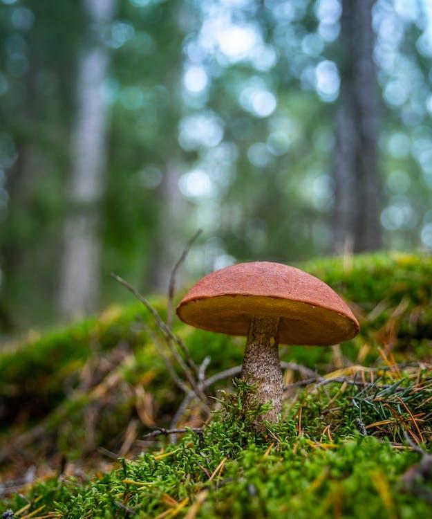 Brown Mushroom On Ground