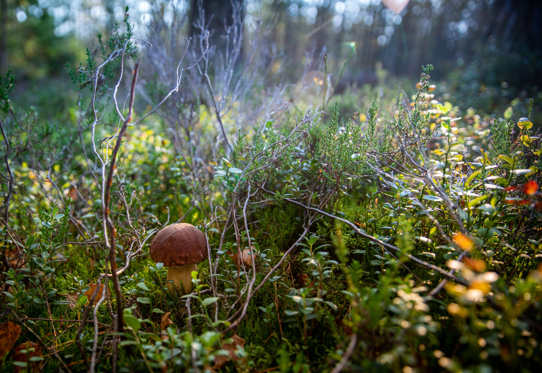 Kostnadsfri bild av flugsvamp, miljö, svamp, växt
