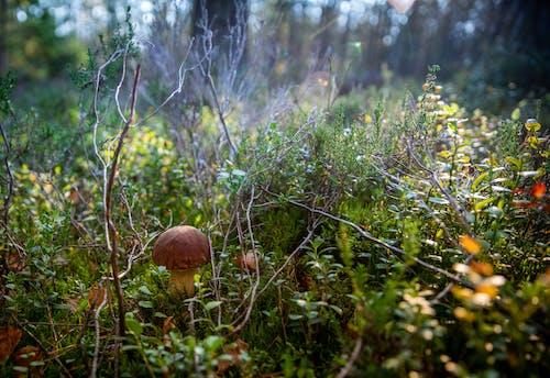 Безкоштовне стокове фото на тему «гриб, завод, навколишнє середовище, поганка»