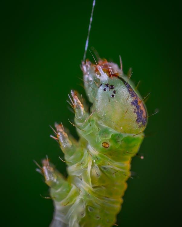bezobratlí, divočina, entomologie