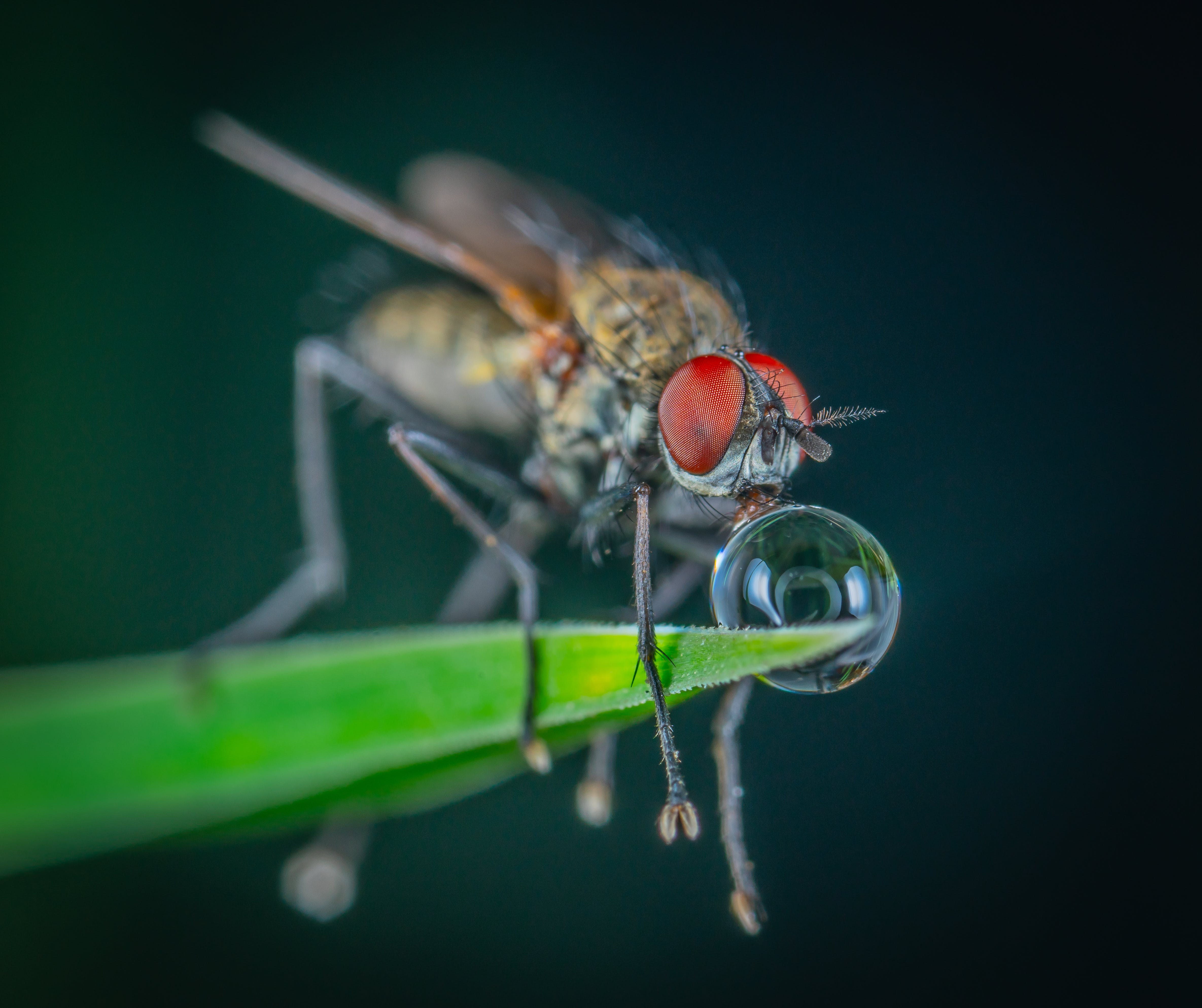 Macro Photography Of Fly Perched On Leaf