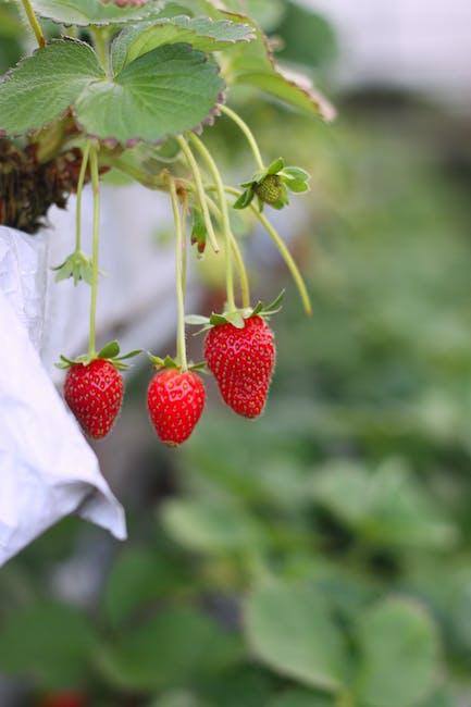 Strawberry Selective Focus Photograph
