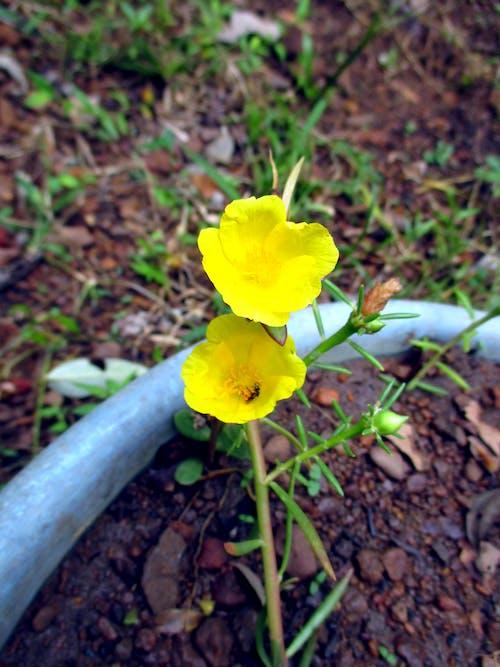 꽃 바탕화면, 꽃바구니의 무료 스톡 사진
