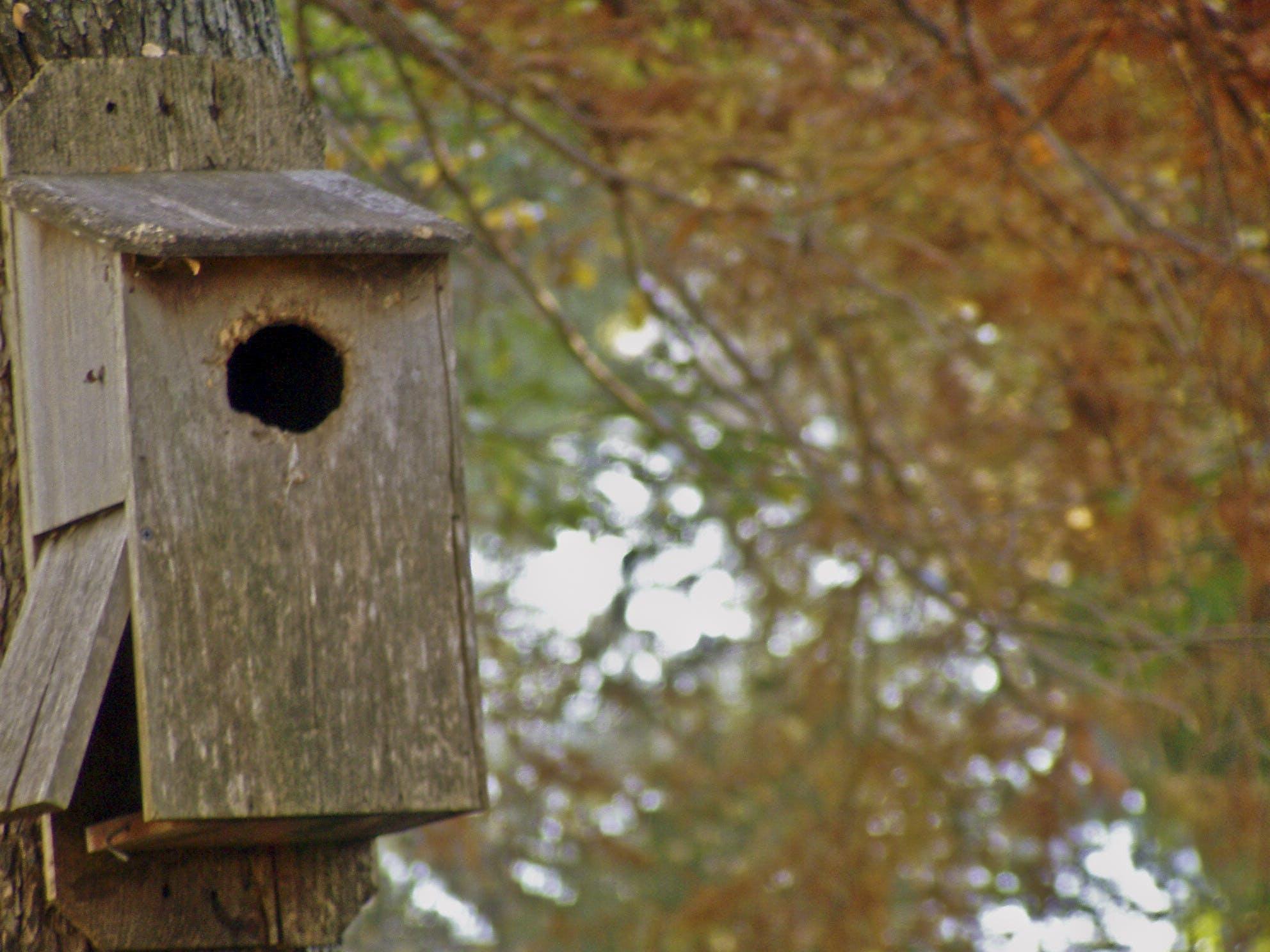 Free stock photo of autumn, autumn colours, autumn leaves, bird house