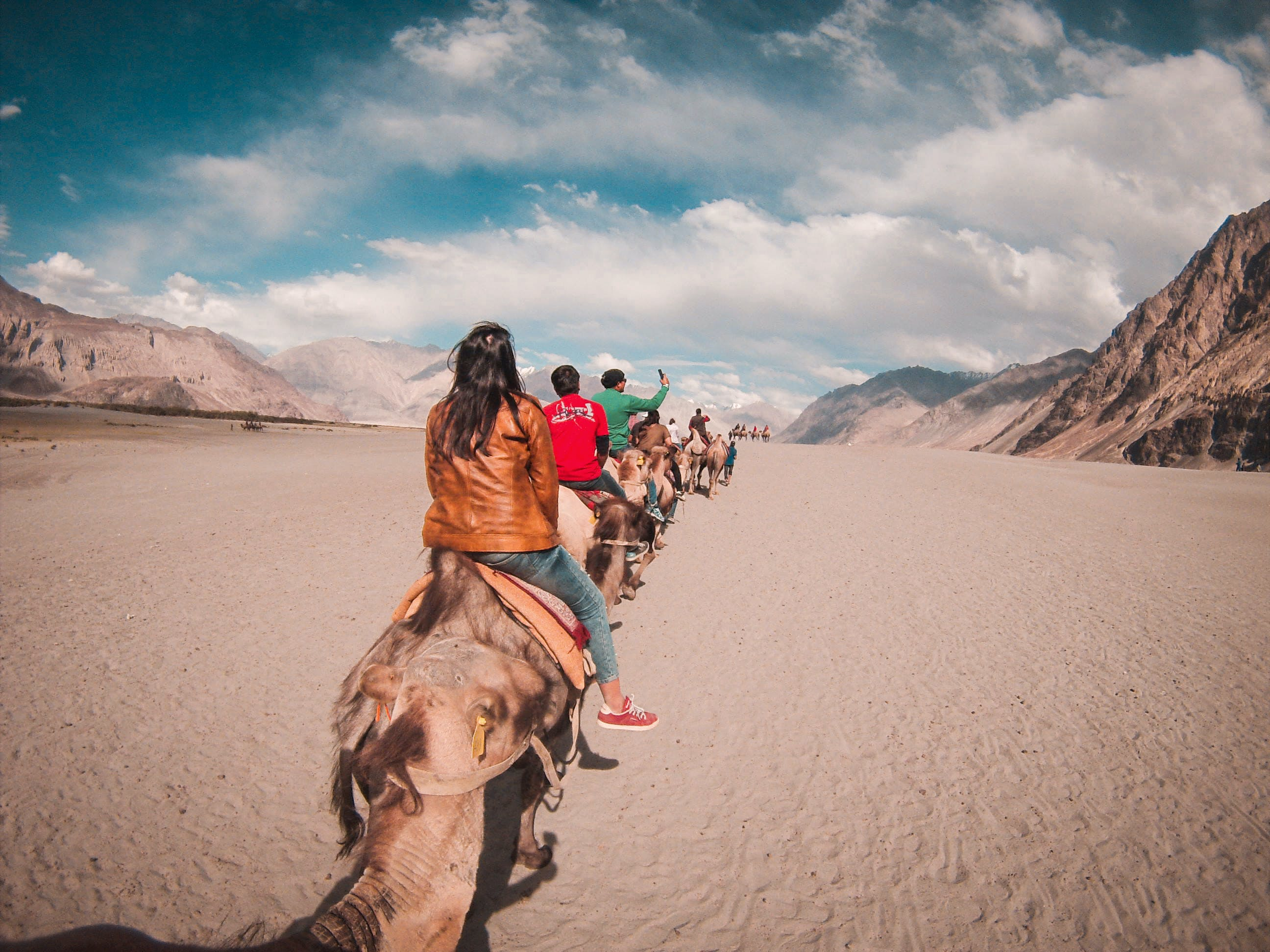 Foto d'estoc gratuïta de camells, cel, conduint, desert