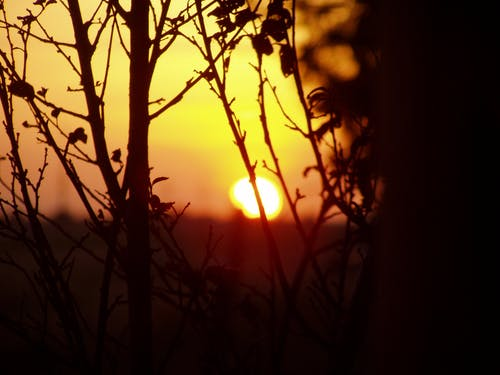Free stock photo of branches, early morning, evening sun, golden sun