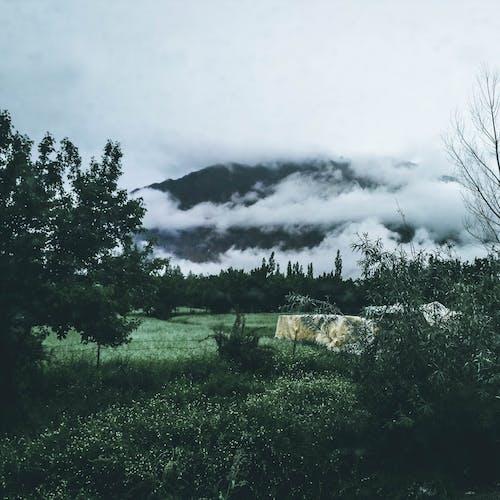 ağaçlar, bulutlar, bulutlu, çevre içeren Ücretsiz stok fotoğraf