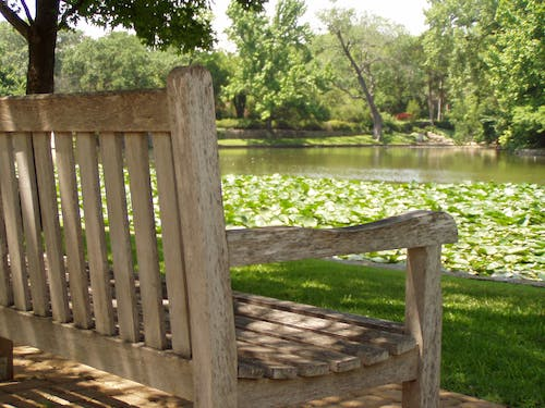 Free stock photo of bench, green, lilly pads, park