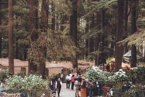 Darmowe zdjęcie z galerii z bruk, droga utwardzona, drzewa, krajobraz